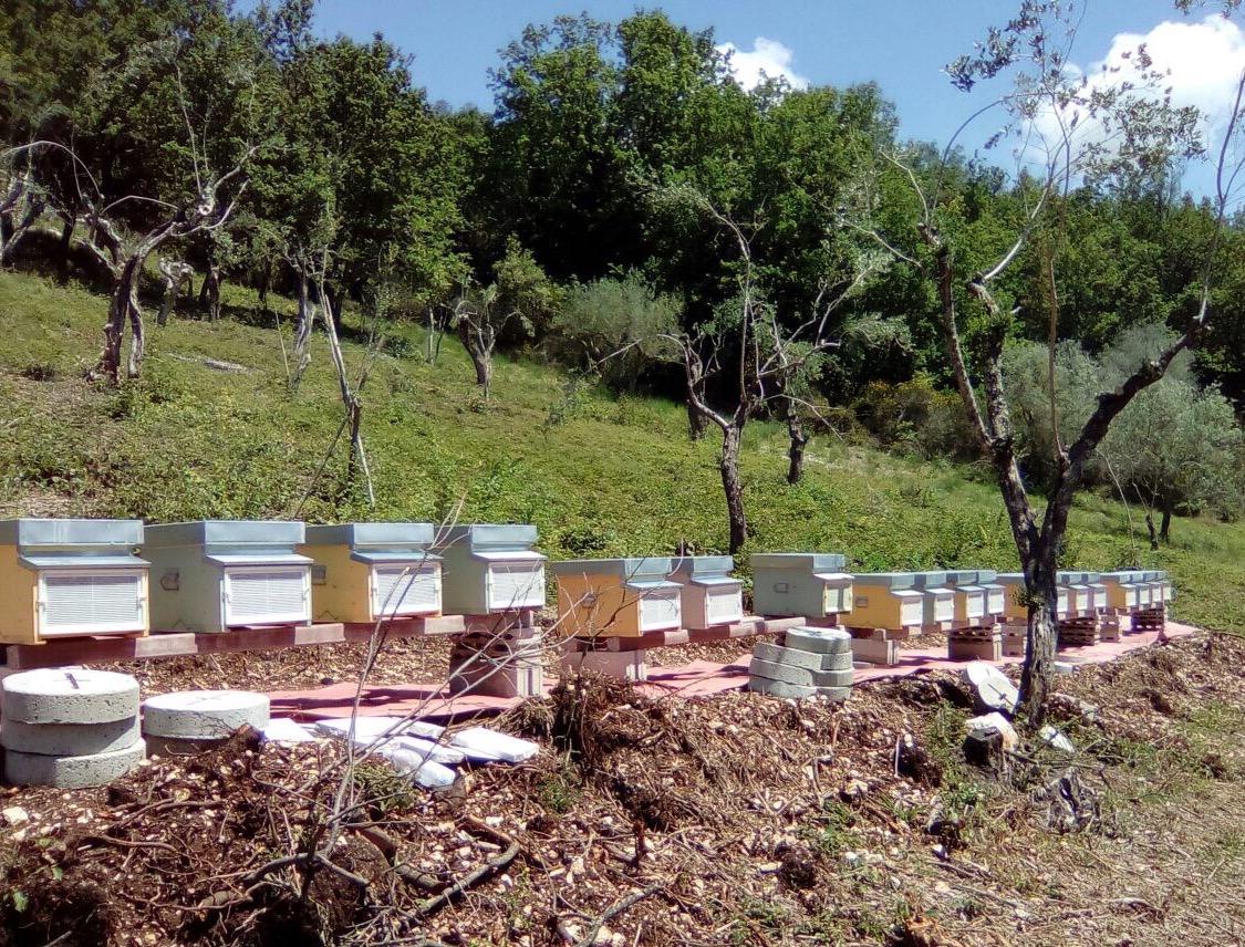 beekeeping Italy