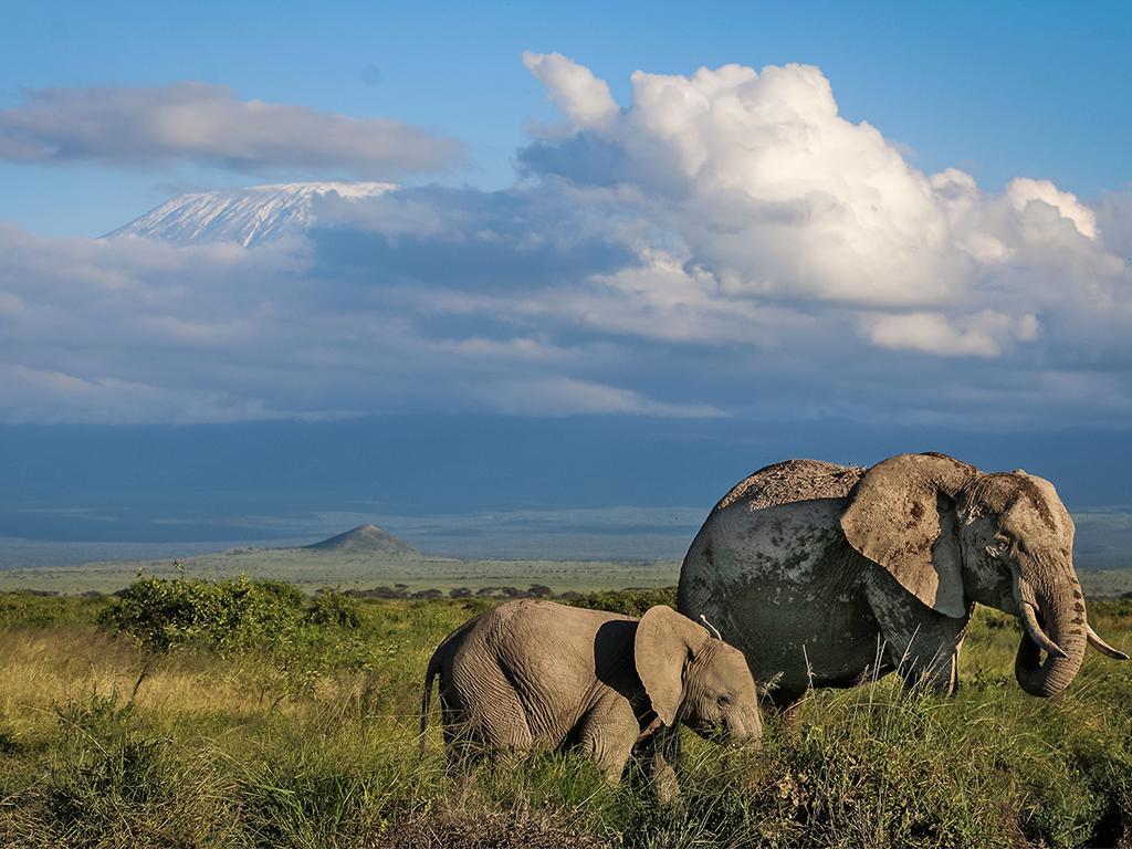 elephant2.png