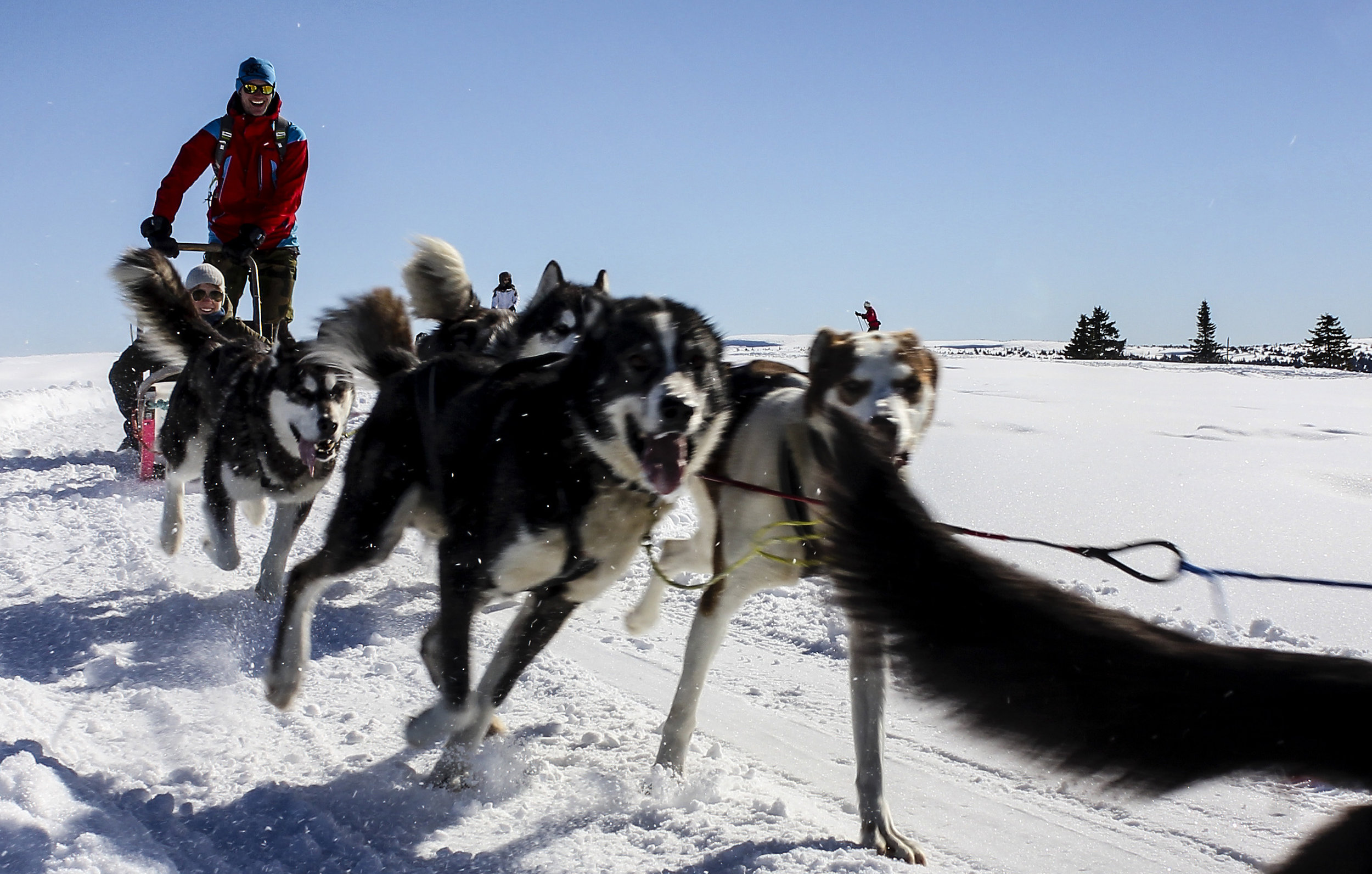 Dog Sledding Norway Sjusjoen Husky Tours