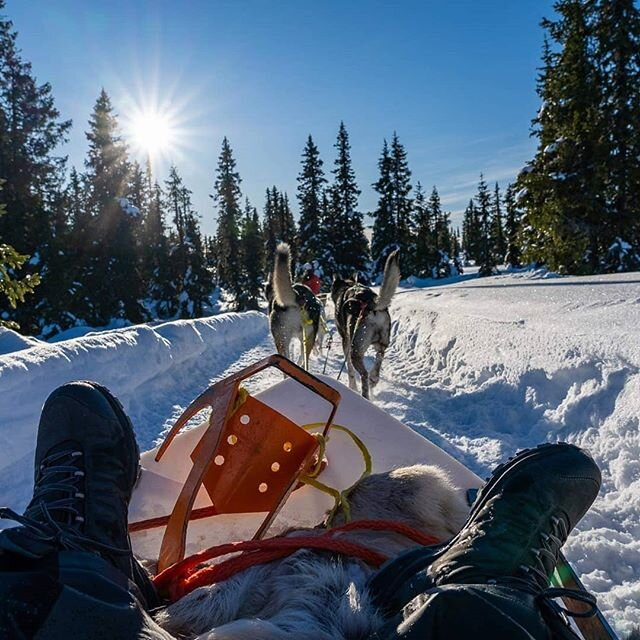 Thank you Frank Lauterbach for joining us again and for sharing with us your photos😍 It was lovely seeing you again! #hundeschlitten #hundekjøring #dogsledding #visitnorway #visitlillehammer #visitsjusjøen
