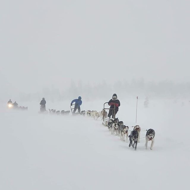 We are not lying when we say that we love weather like today; wind and snow😊👌Dogs agree with us and so did today's guests!😊🐾 📷@instaploot  #mushing #dogsledding #nordictours #hundeschlitten #hundekjøring #visitnorway #visitlillehammer #visitsjusjøen @nordictours