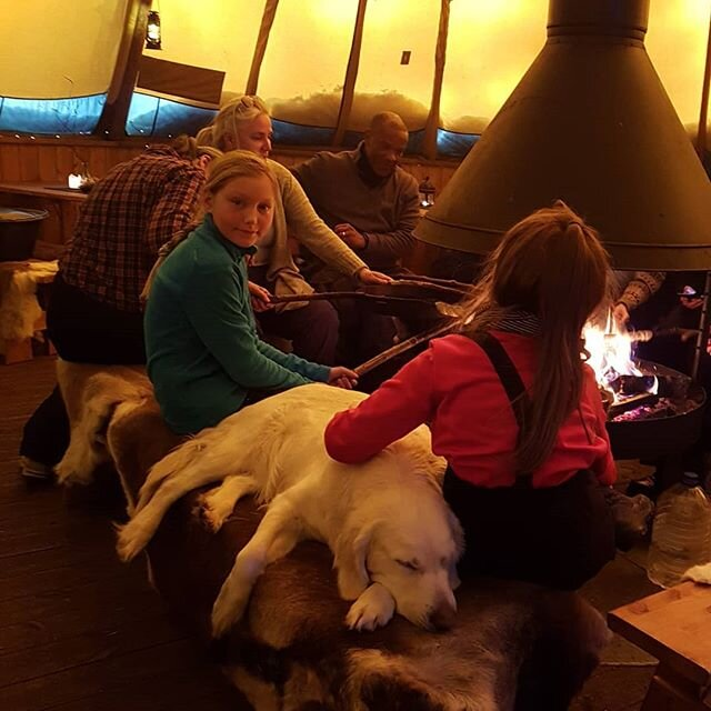 A cozy time by the fire making bread twists is part of the experience joining us. The fact that we have some cuddly dogs there as well is quite ok😍👌#hundekjøring #goldenretriever #visitnorway #visitsjusjoen #visitlillehammer