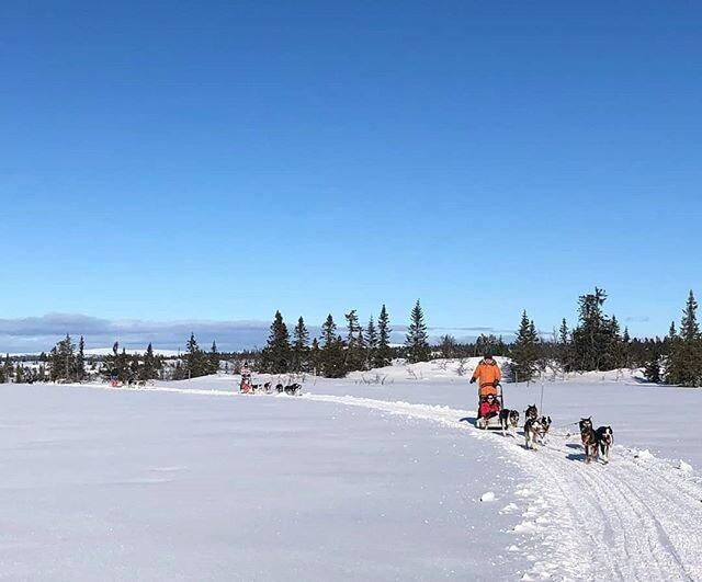 Another amazing and sunny day, 3 tours of 15km😚😎🐾 #dogsledding #hundekjøring #vinterferie #sjusjøen #visitoslo #visitnorway #visitsjusjoen #visitlillehammer
