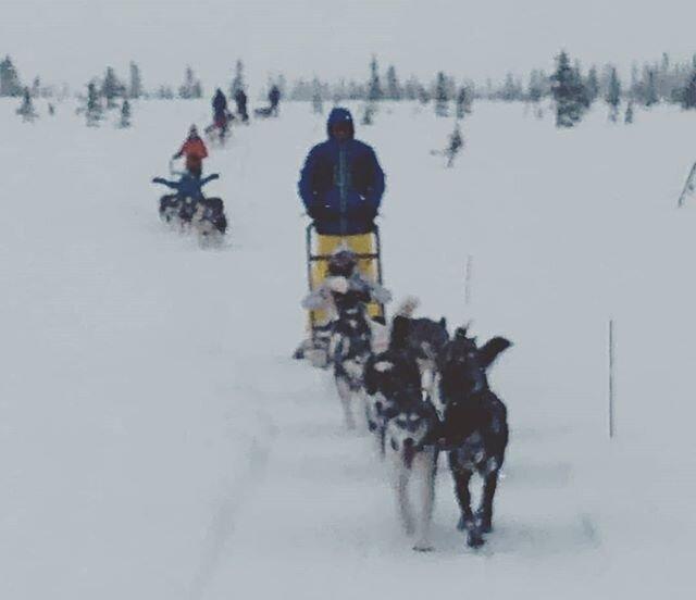 From one of yesterdays' tours of 15km😊😊🐾🐾 #visitsjusjoen #visitlillehammer