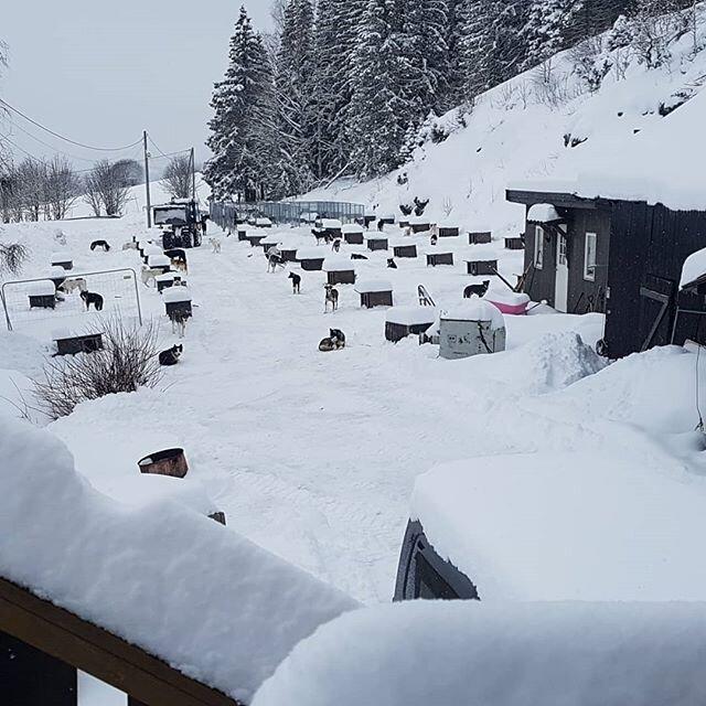 Vi mangler ikke snø! 😅🐾#kennel #åsmarka #valper #alaskahusky #fødeklar
