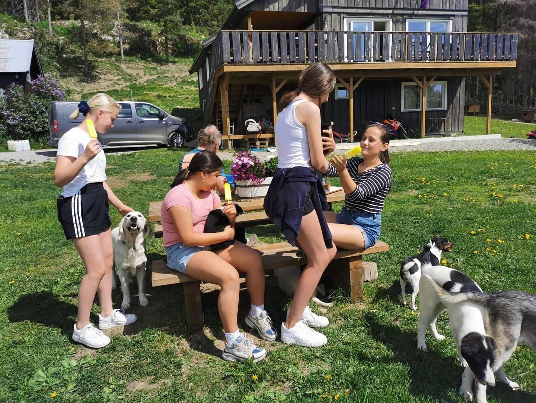 Kennelbesøk Sjusjøen Husky Tours