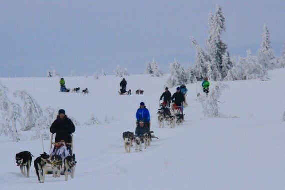 We can do quite many sleds on the same tour. Still, we prefer not more than 7 sleds, 14 guests for safety reasons.