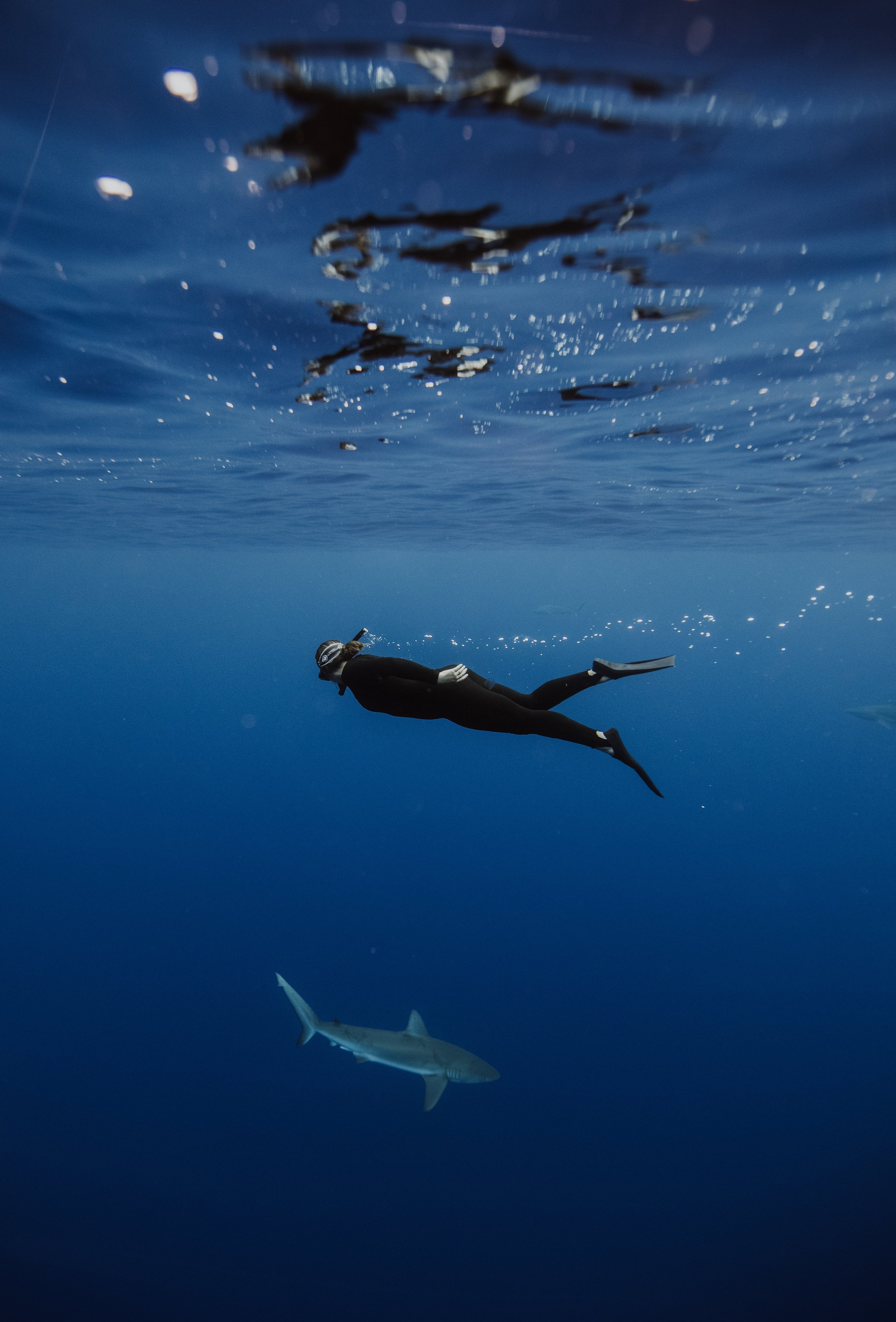 freediving with sharks in oahu