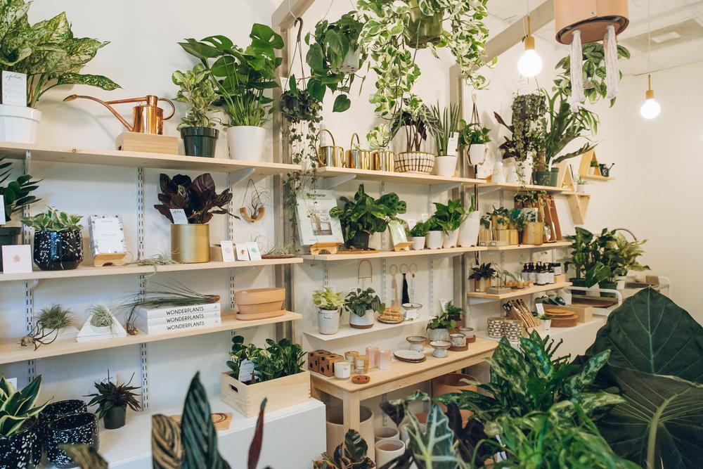 Folia+Collective,+a+plant+shop+in+Pasadena+-+Haarkon+in+California.jpg