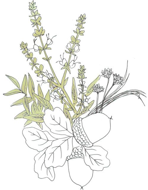Pre1781_Wildflower.jpg
