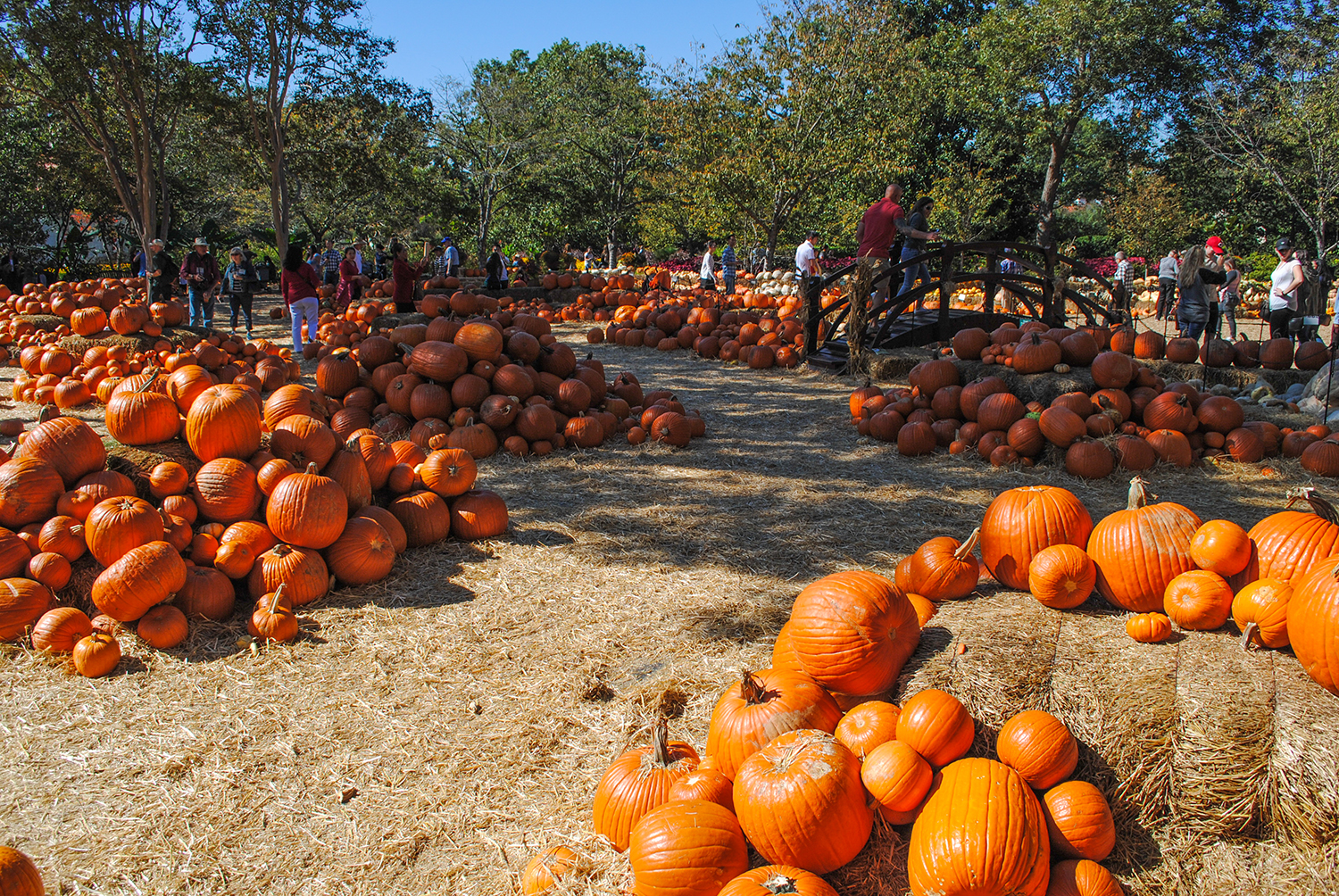 Pumpkins galore at the Dallas Arboretum