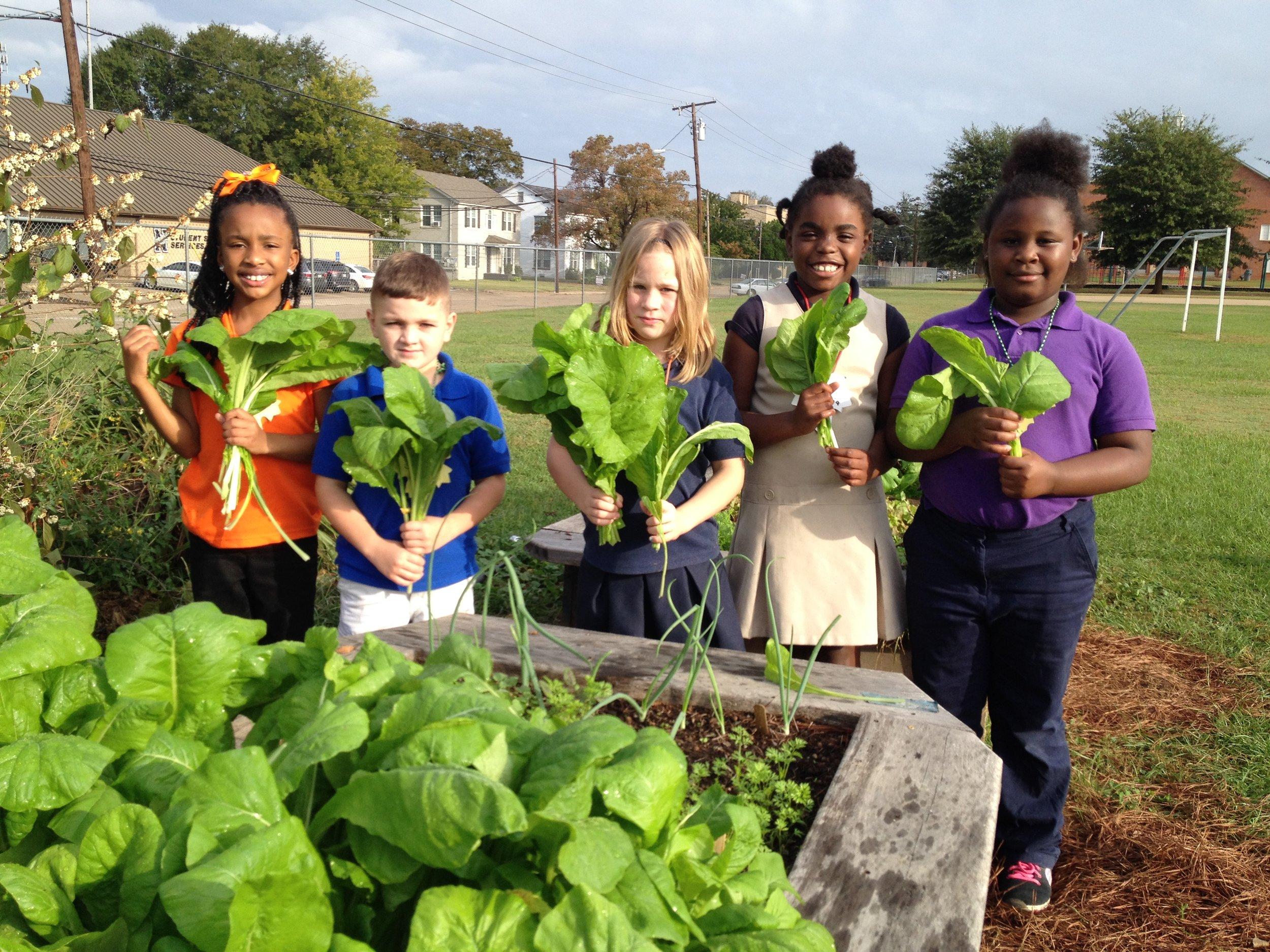 3rd Grade TJR School Garden Buds harvest fresh mustard greens.