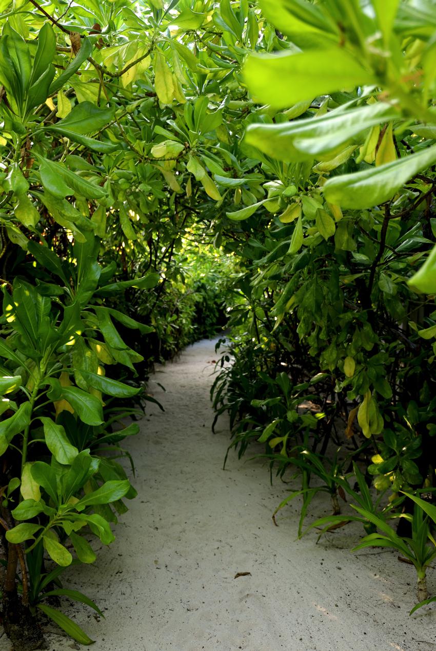 Maldives19.jpg