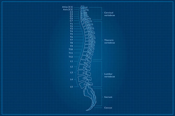 An illustration of the spine in its neutral position  Image source:  https://www.builtlean.com/2016/05/30/neutral-spine-posture/