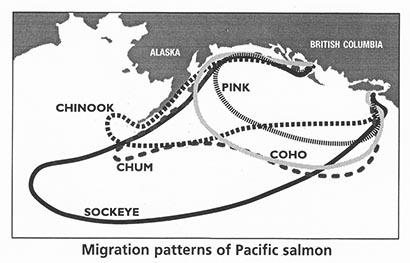 migration_patterns_web.jpg