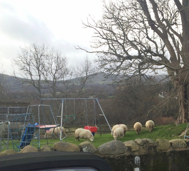 The view from my cottage in Ty'n y Coed - a local farmer's sheep escaped early one morning!