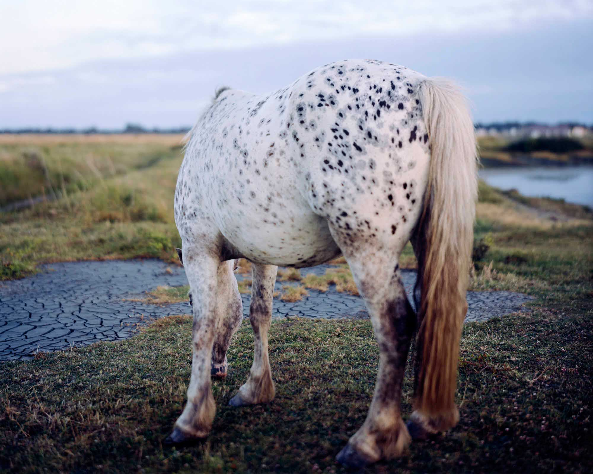 horse60x48inch11880.jpg