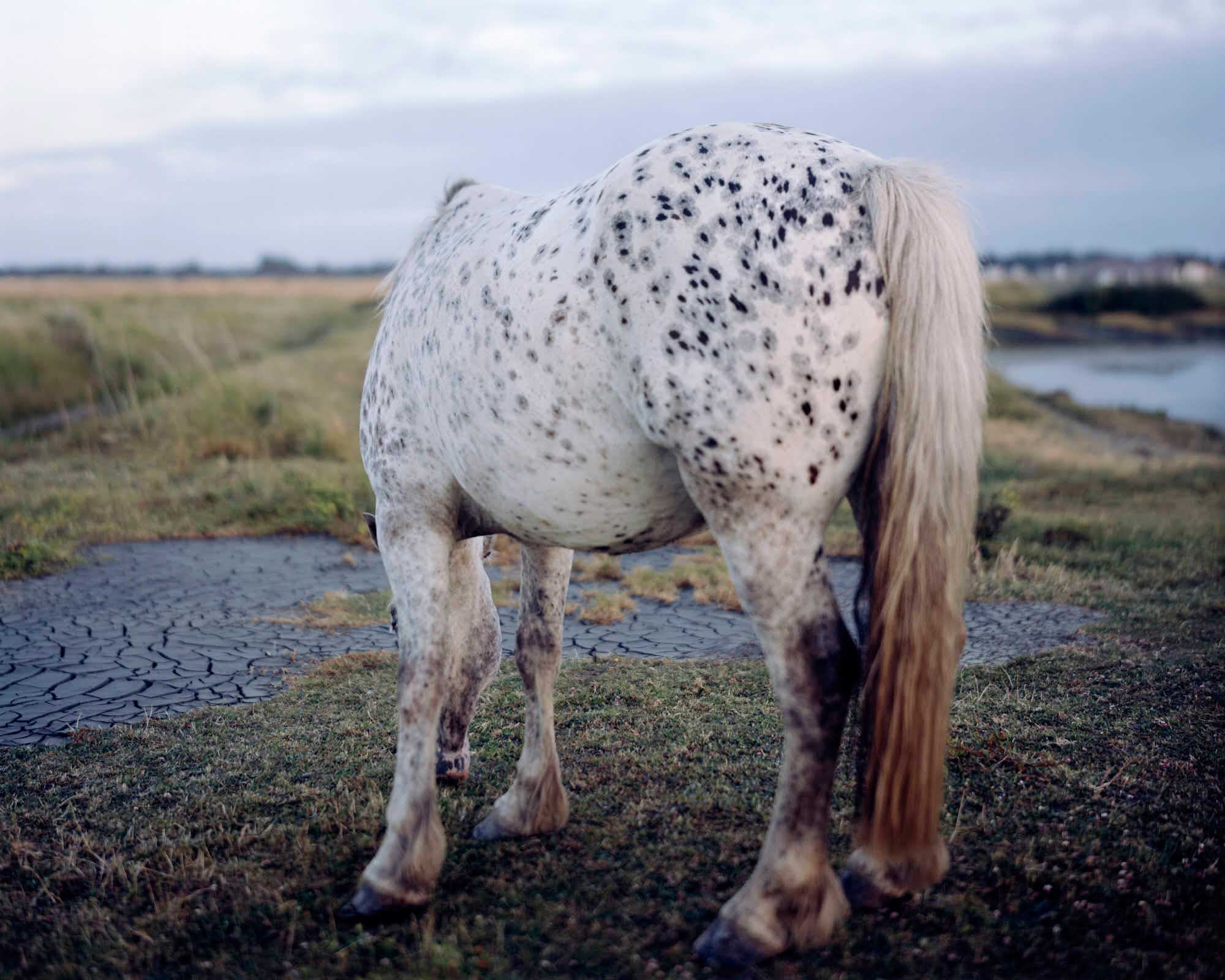 New Forest, Pigment Print, 152 x 190 cm, 2009, Edition of 7