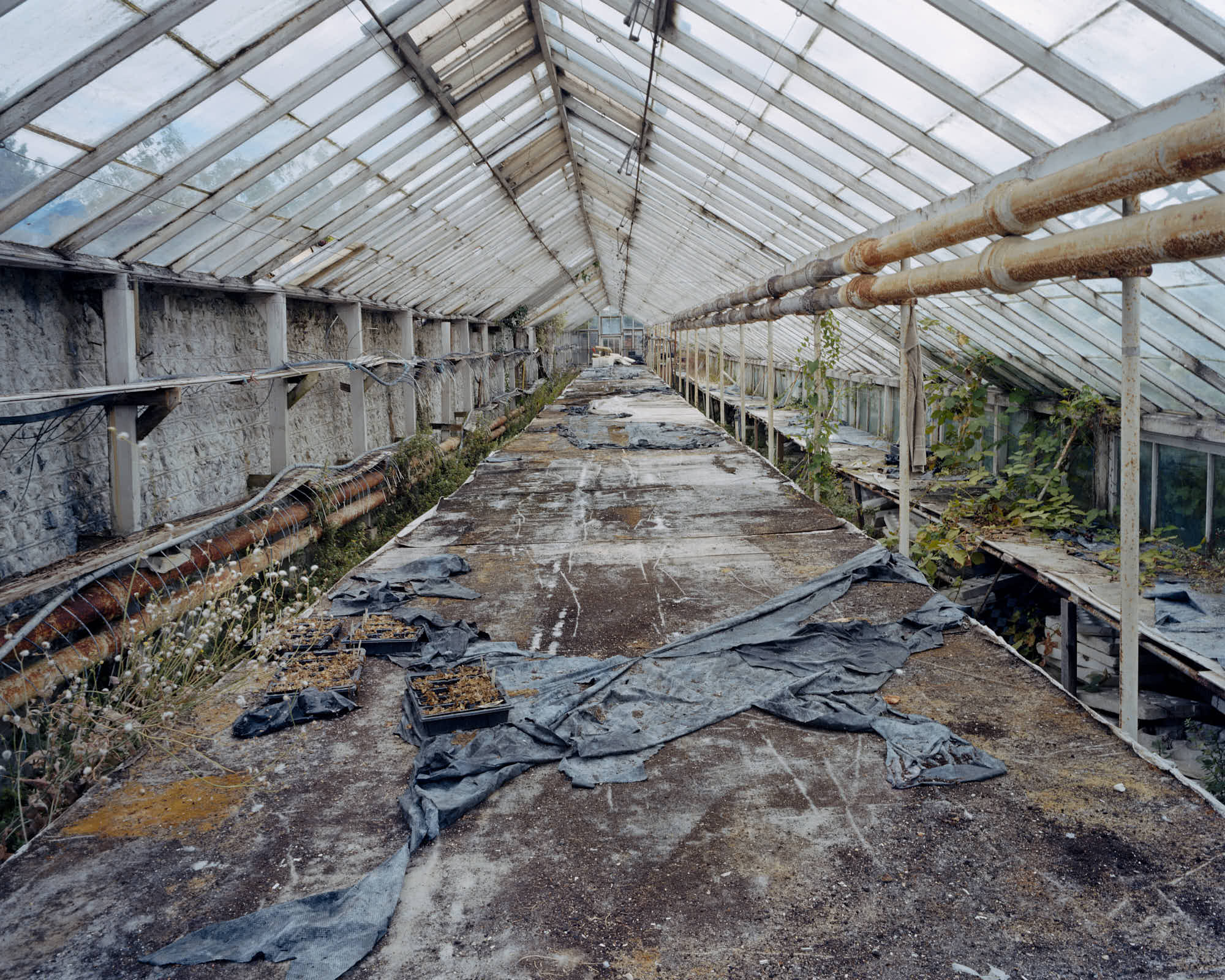Greenhouse, Pigment Print, 102 x 127 cm, 2004, Edition of 7