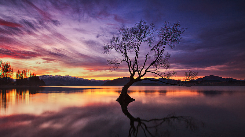 That Wanaka Tree-Darren J Bennett
