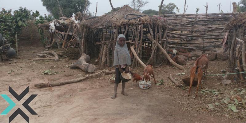 A Child Feeding Livestock in Kofar Yanga ii