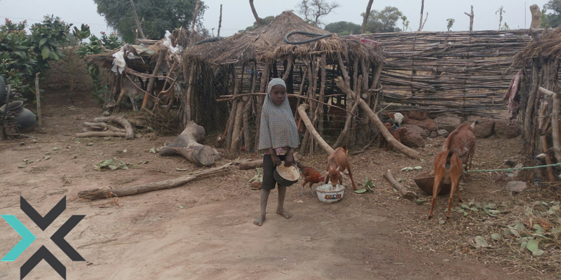 A Child Feeding Livestock in Kofar Yanga ii