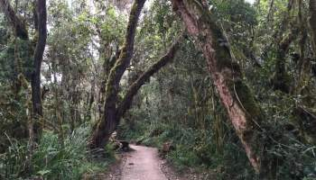 day 1 forest.jpg