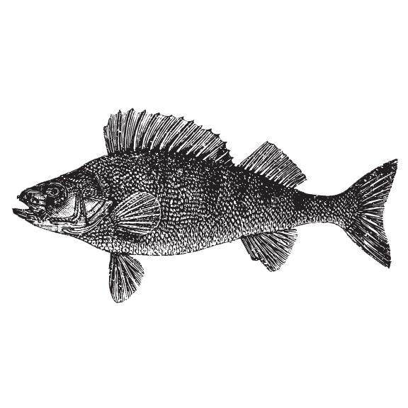 Rockfish Stew Institute of Literature & Materials