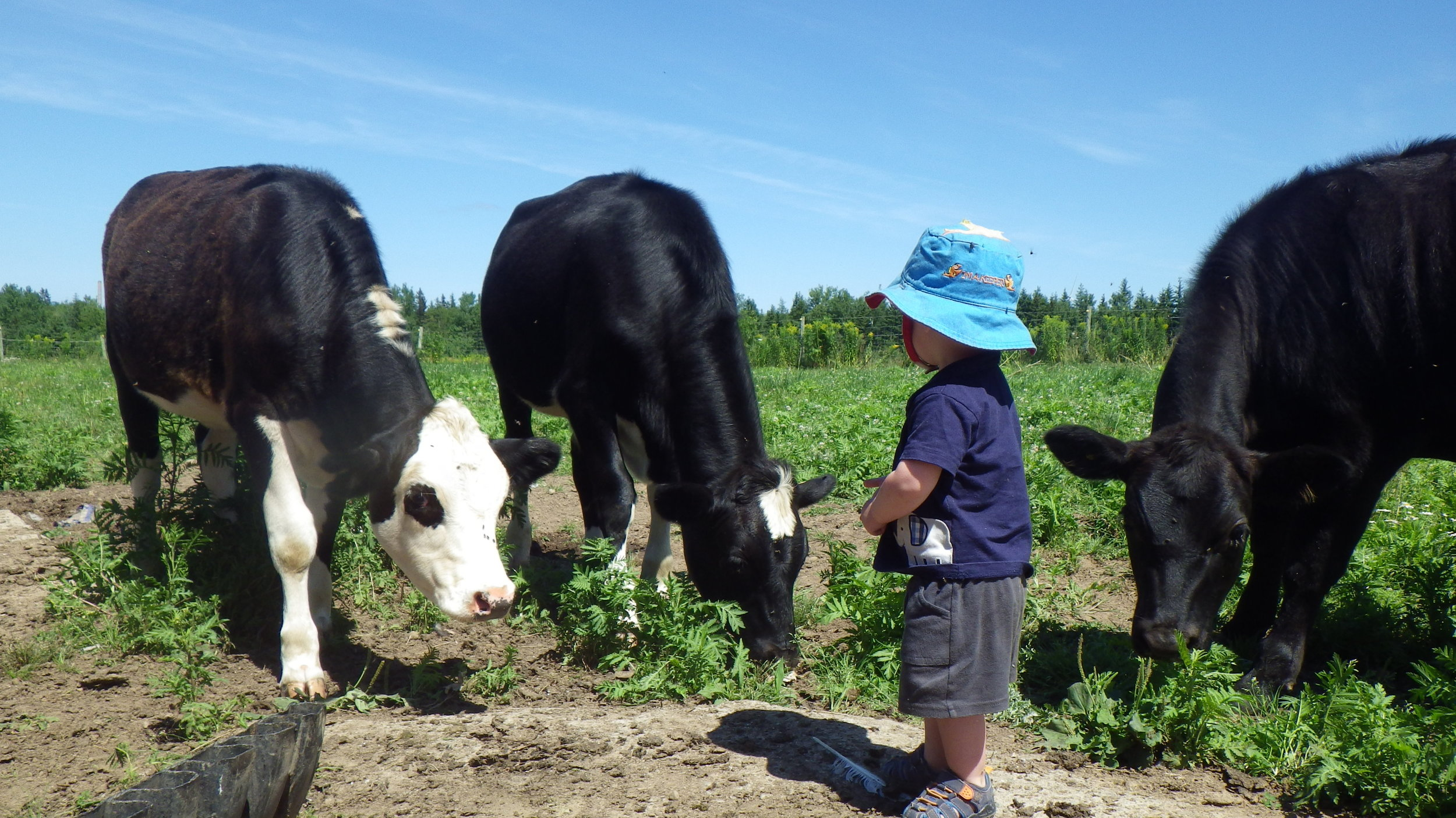 Our farmer in training Victor checks his cows to make sure they have lots of grass to eat