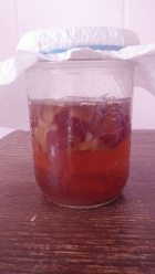 SCOBY starting a new fermentation