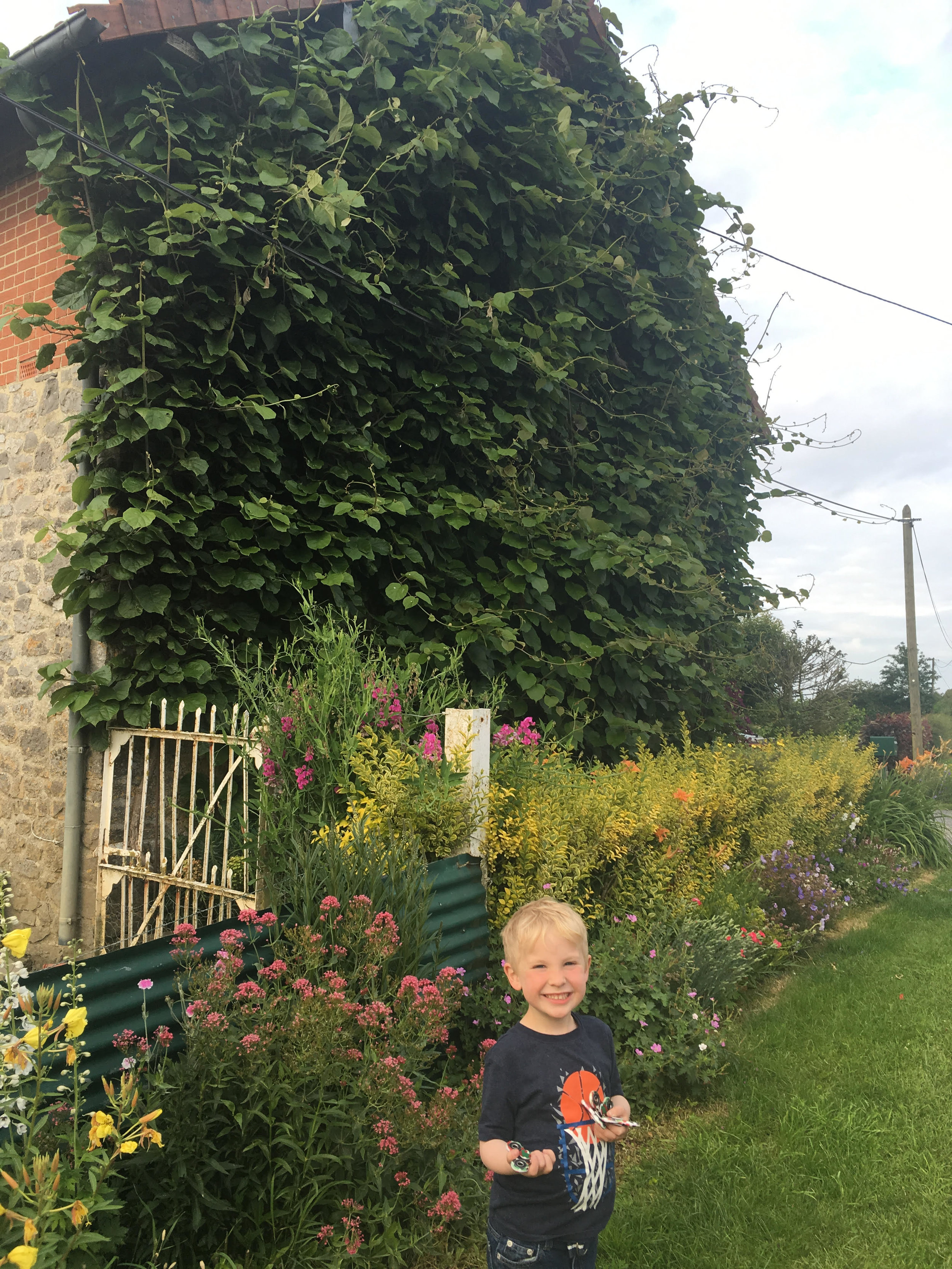 Look at these kiwi vines growing on my parents stone and brick house in North of France!