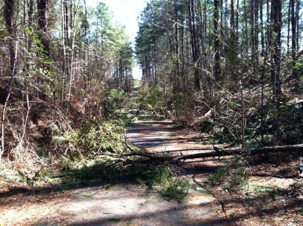 Storm Debris Clean Up