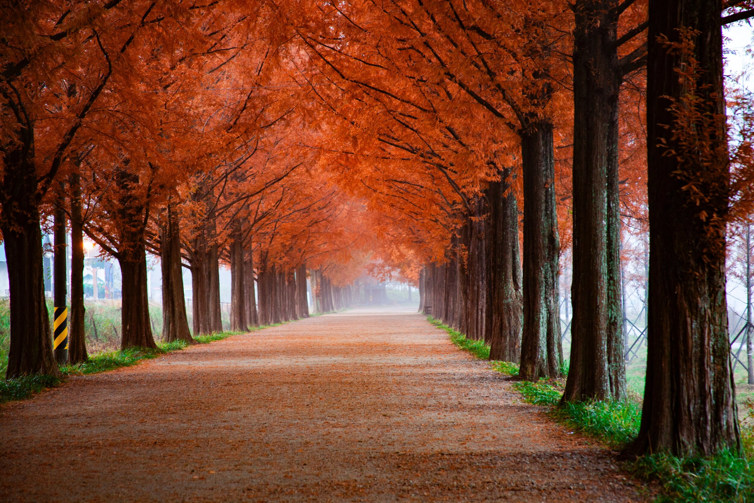 4k-wallpaper-autumn-branches-2734469.jpg