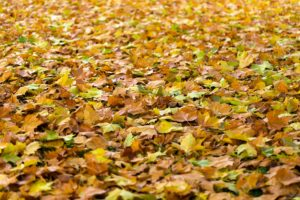 How Do Fallen Leaves Affect Your HVAC?
