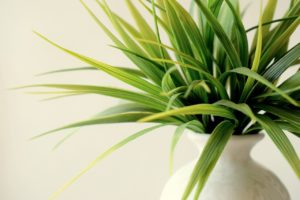 Improve Your IAQ with the Right Indoor Plants