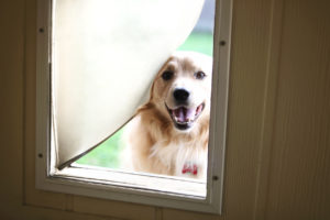 Homes With Pets: HVAC Tips and Maintenance