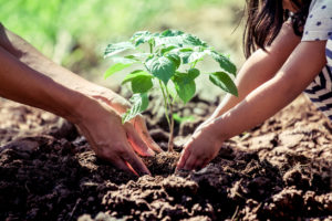 How Planting Trees Can Lead to HVAC Savings