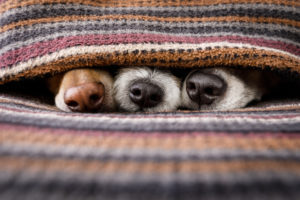 Ideal Indoor Heating for Homes with Pets