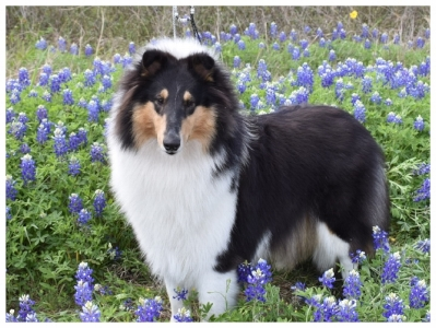 Spring has arrived in Texas   (Duchess)