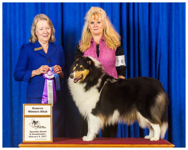 """Commanders Diva In Silk Stockings of JJaed's """"Duchess"""" 10 mths old took """" Reserve Winners Bitch""""   """"South Texas Collie Specialty Show"""""""