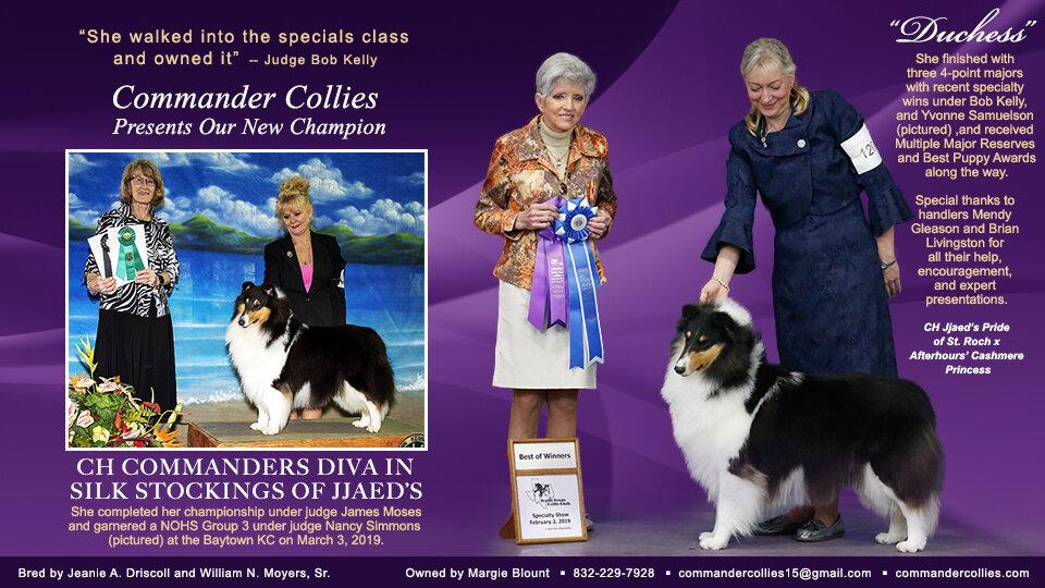Duchess CH finish Collies Ad 2 yrs 11 mths old.jpg