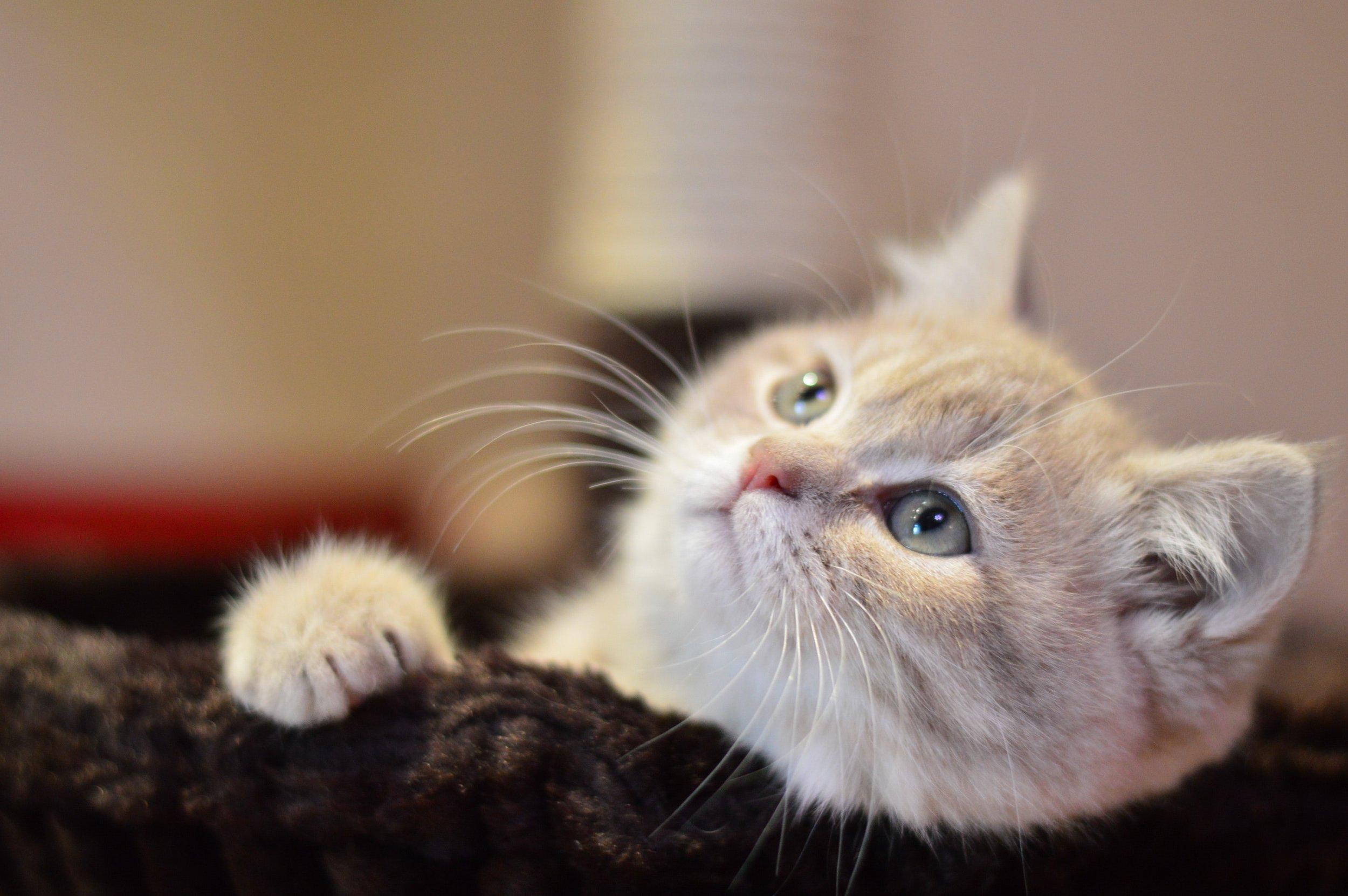 adorable-animal-cat-236660.jpg