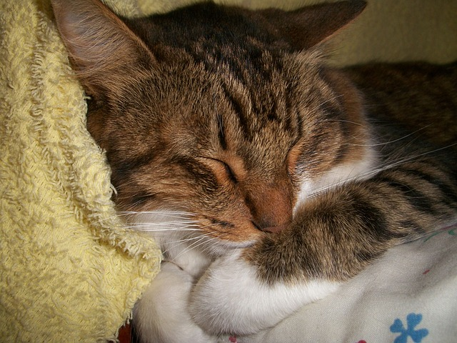 cat-14558_640.jpg