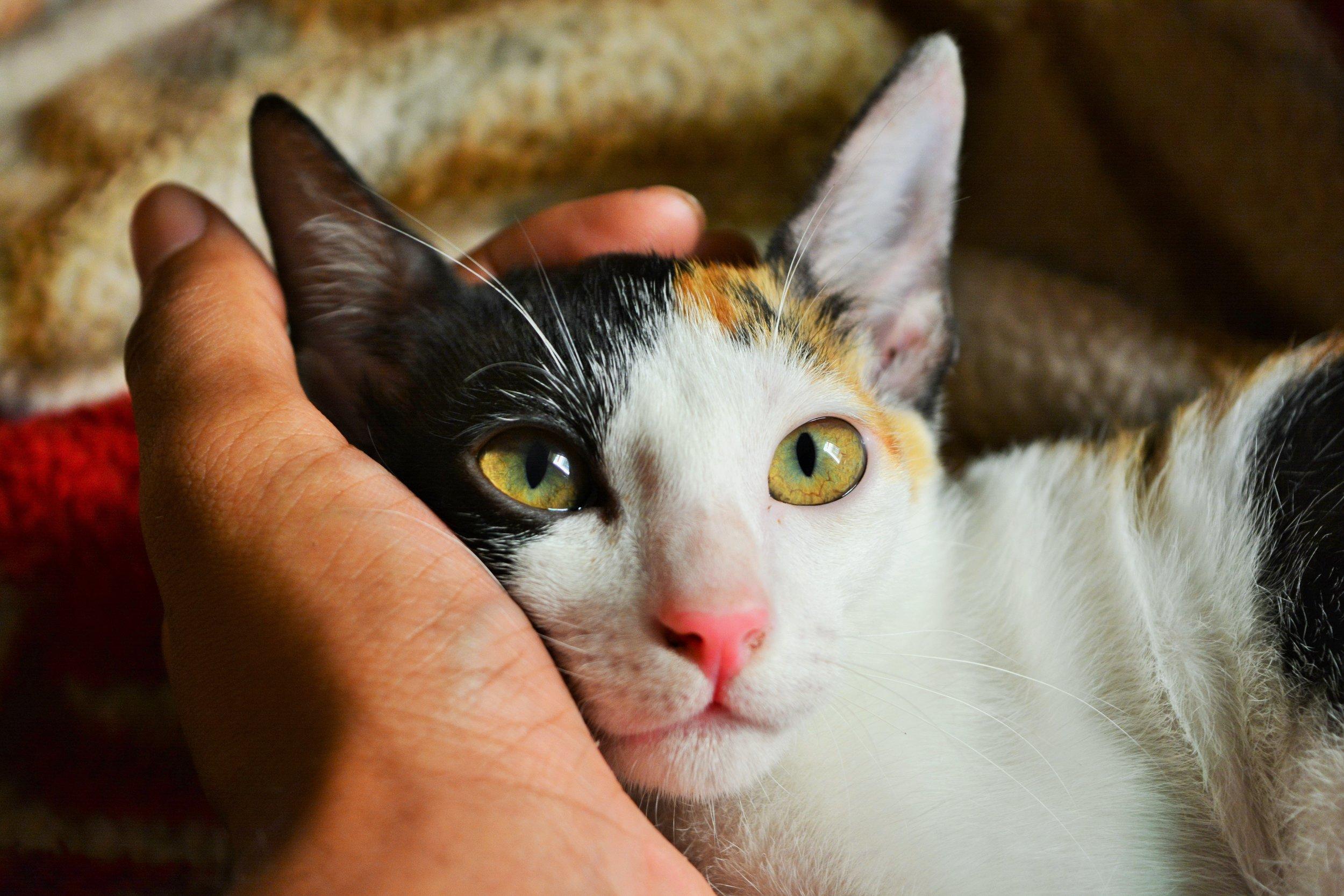 animal-animal-portrait-cat-790033.jpg