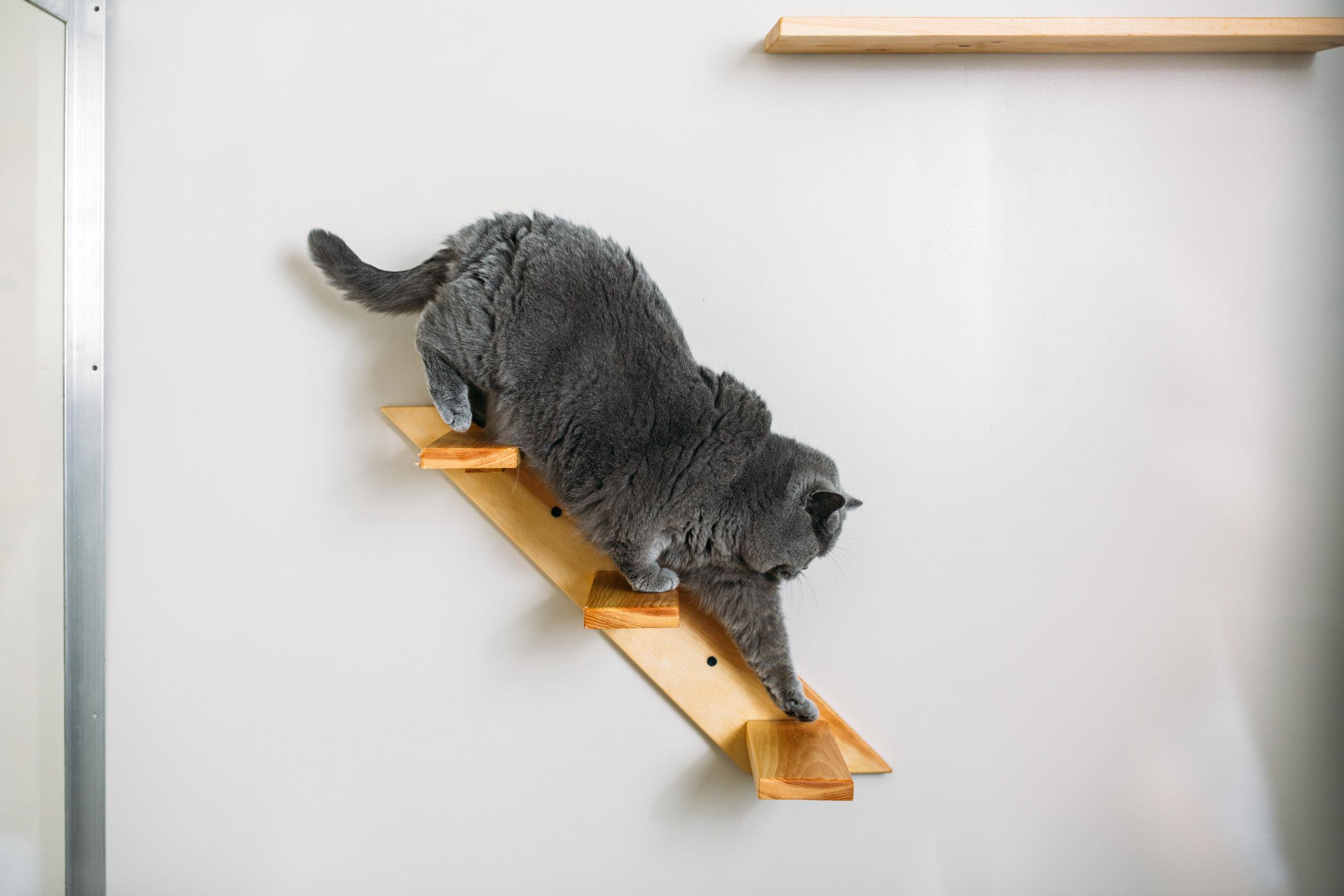 cat boarding NJ.jpg