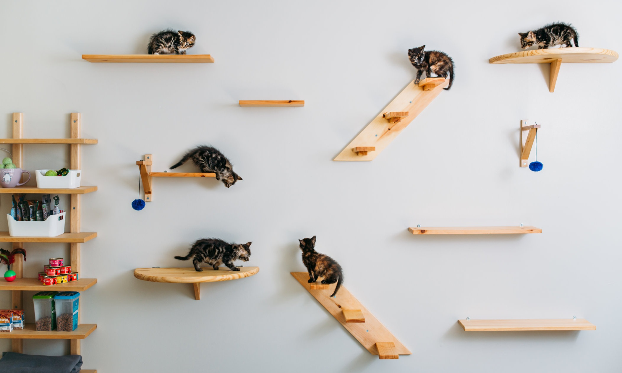 Our boarding kitties love playing on our climbing wall during play time!