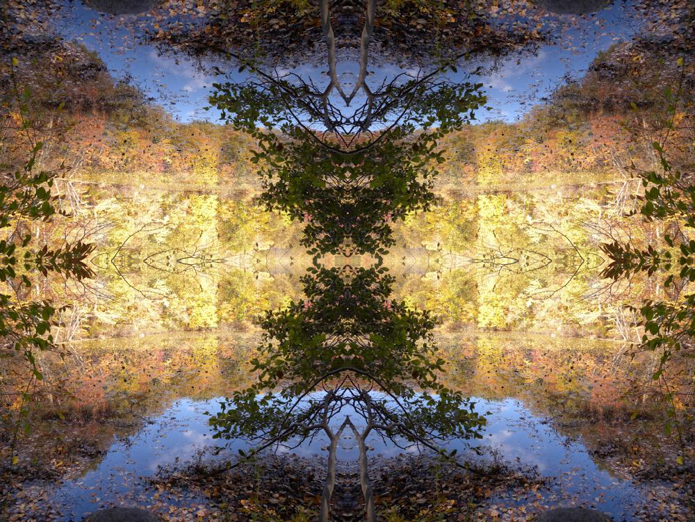 Golden Fall Day at Birchwood Lake