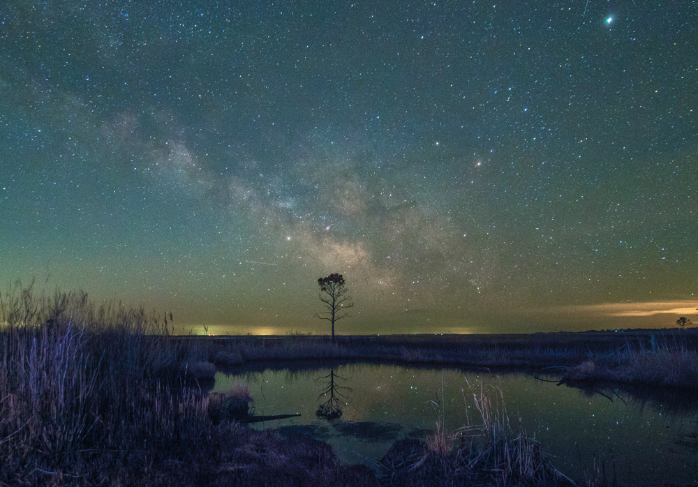 Milky Way Over a Lone Tree
