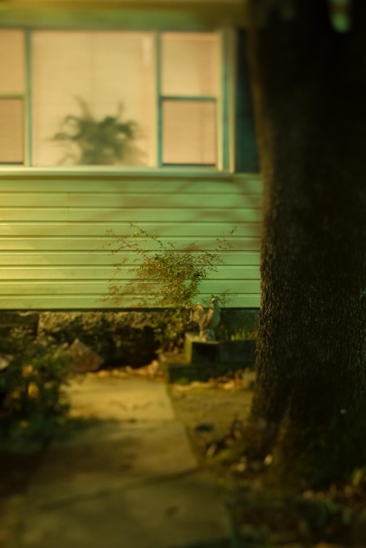 A Suburb That Dreams of Jungles After Dark - Nightwalker No. 5