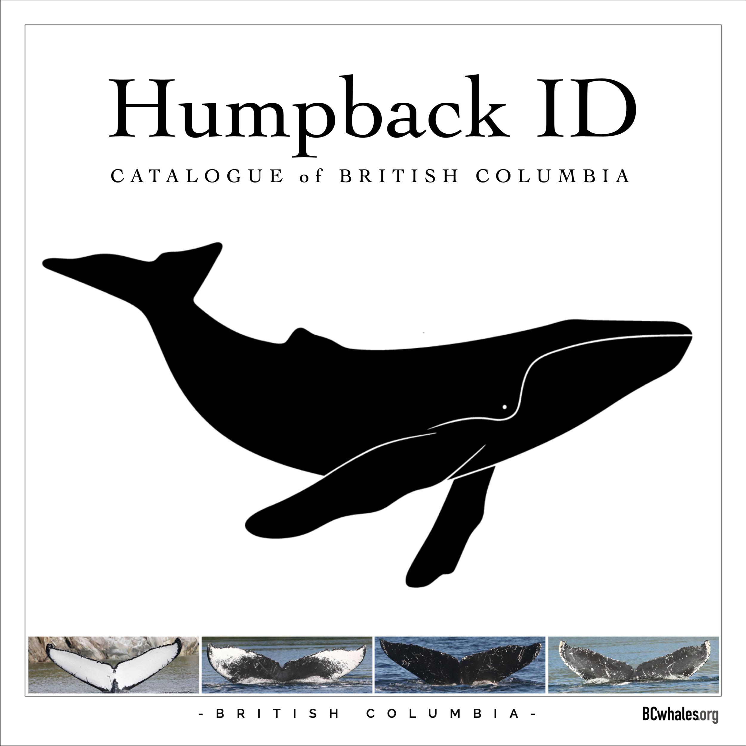Humpback Catalogue.png